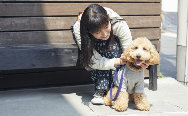 犬を飼う方は必ず押さえておくべき犬の散歩マナーについて