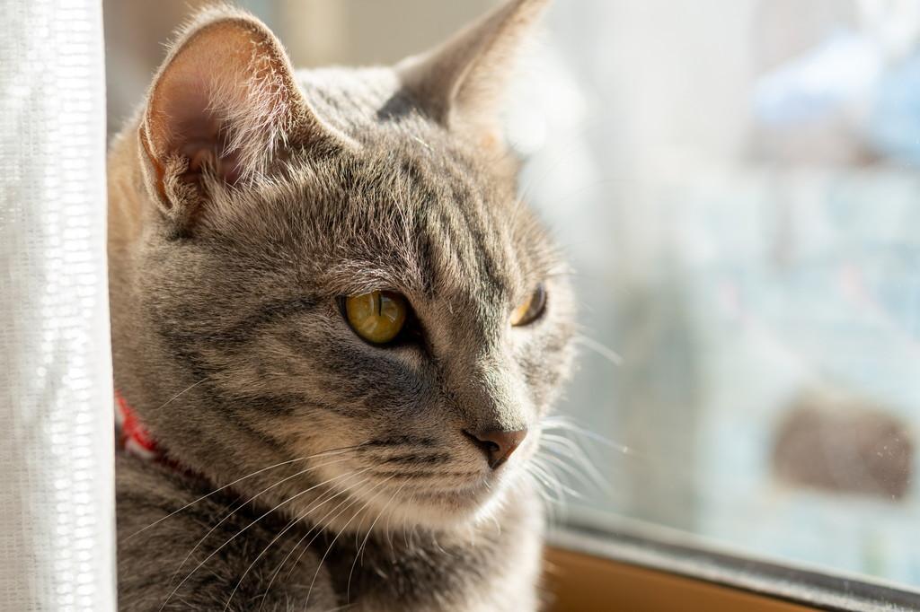 猫 が 嫌い な 匂い