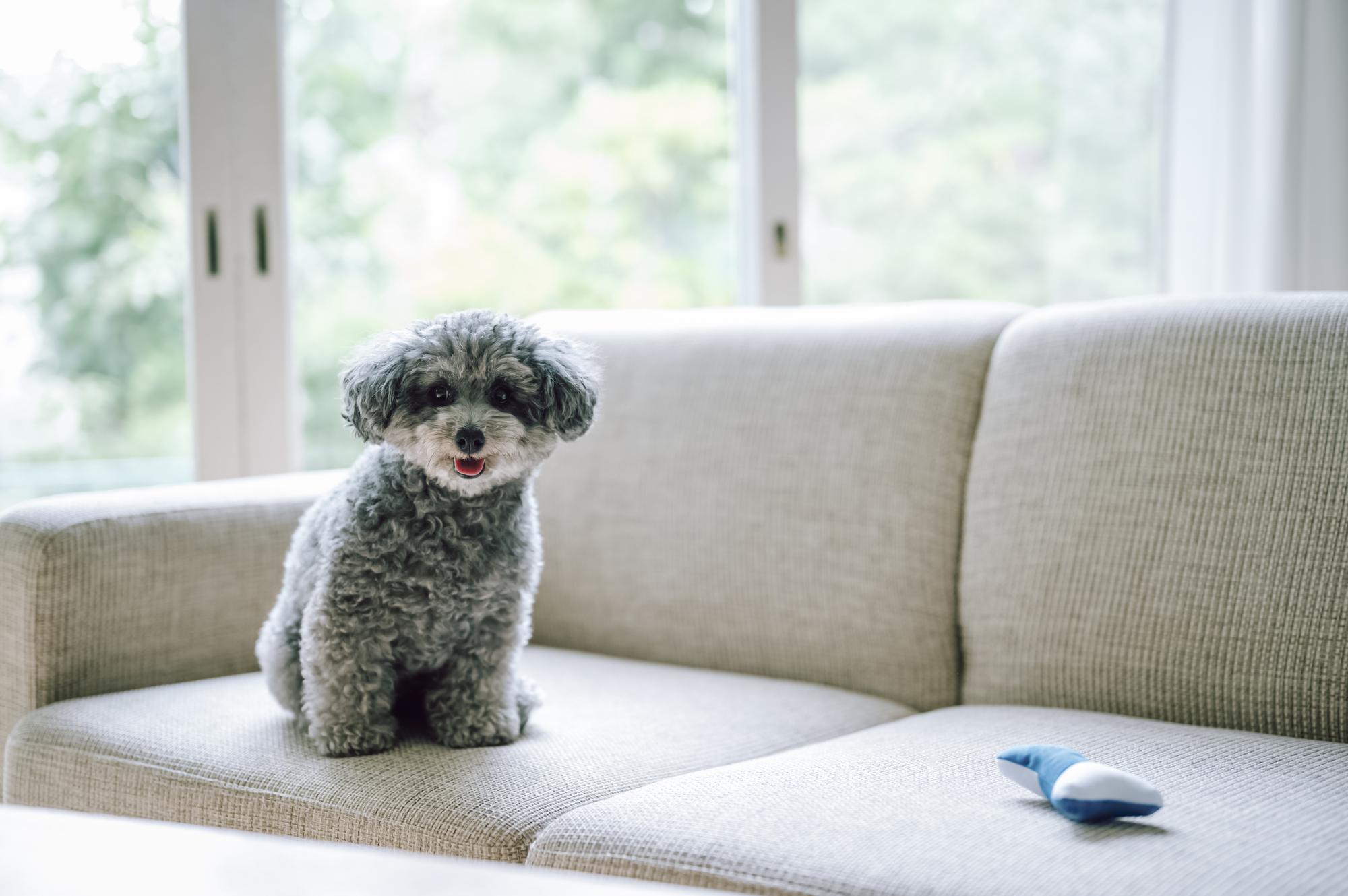 賃貸で犬を飼う場合に注意すべきこととは?