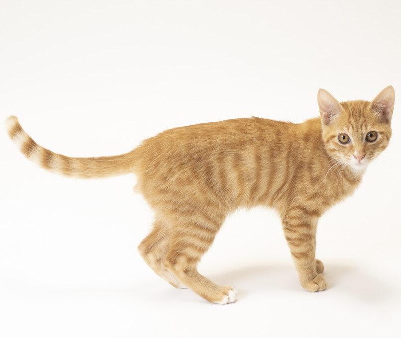 猫のしっぽの振り方で気持ちがわかる!パターンを紹介!