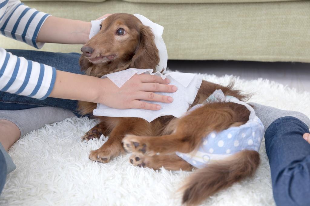 04犬の認知症の症状と予防方法について