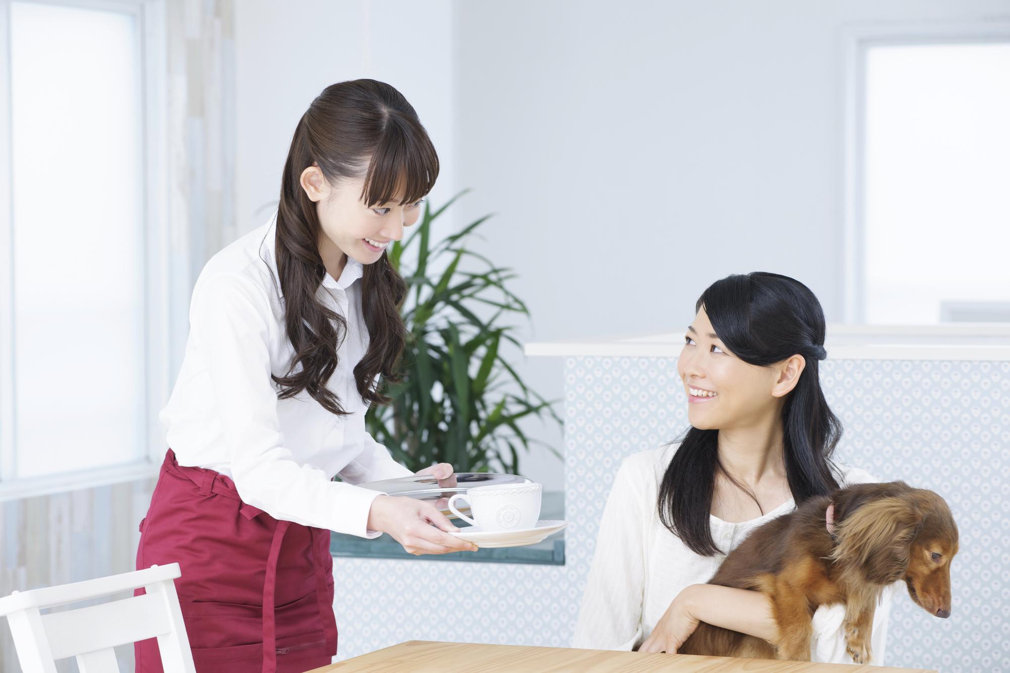 ドッグカフェでの愛犬マナー!はじめてドッグカフェを利用する前には必読!