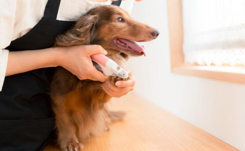 犬の爪切りの必要性について頻度はどれぐらい?