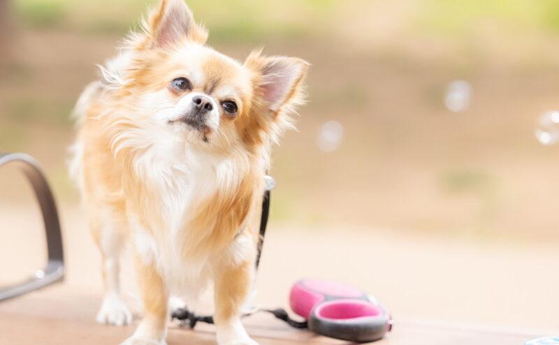 犬の顔が臭い?顔の匂いの原因と対策について