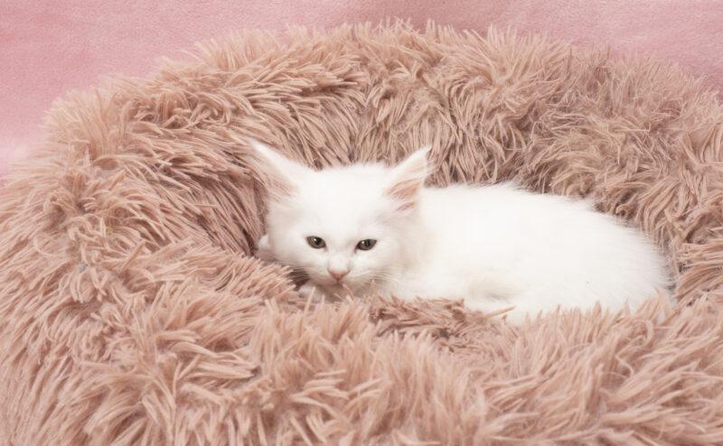 猫の睡眠時間はどれぐらい?猫はずっと寝てても大丈夫?