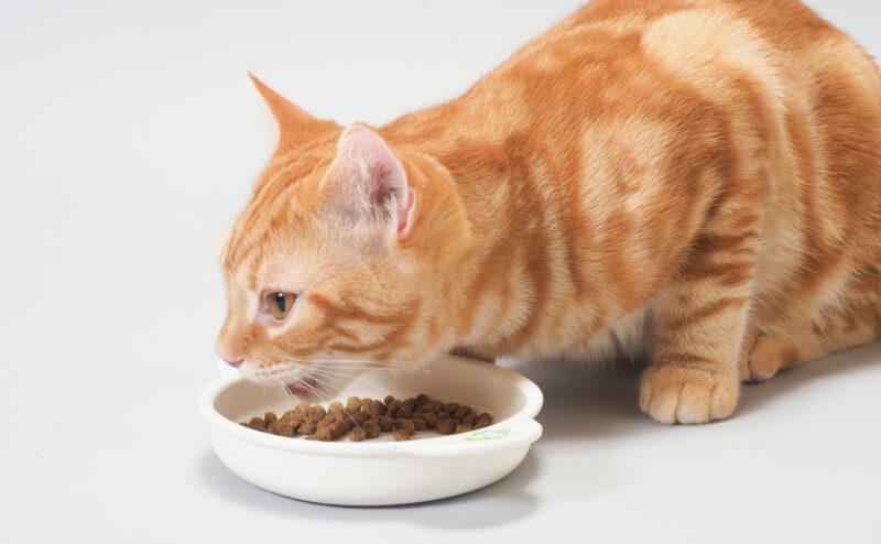 猫の食事はどこに置く?餌を与える場所について