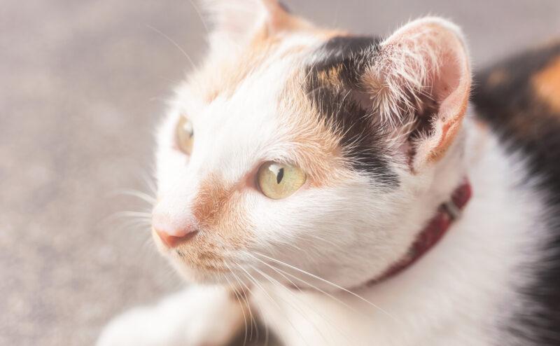 愛猫がボケてしまった…?猫の認知症症状について知ってくべきこと