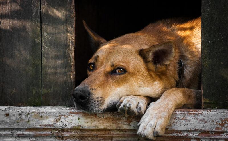 犬が寂しいときの行動や分離不安について