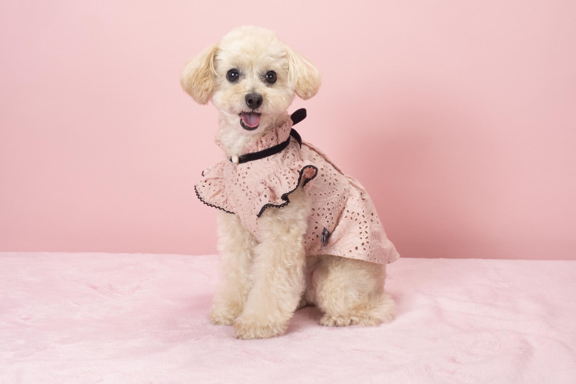 犬に洋服は不要?必要?犬に服を着せるメリットデメリット