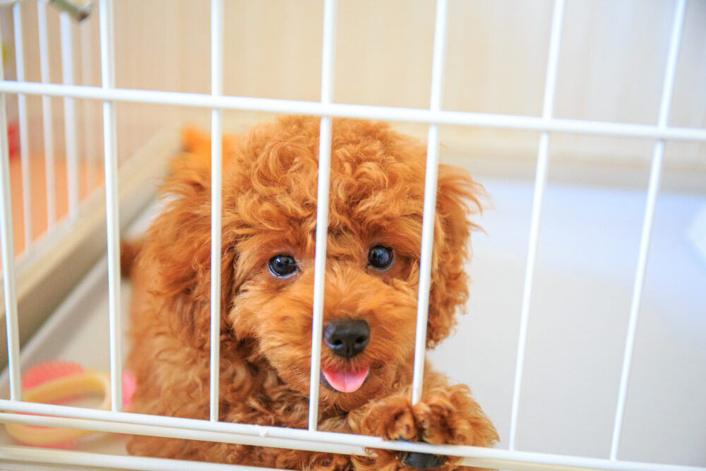 室内犬にケージ用意するメリットや選び方について