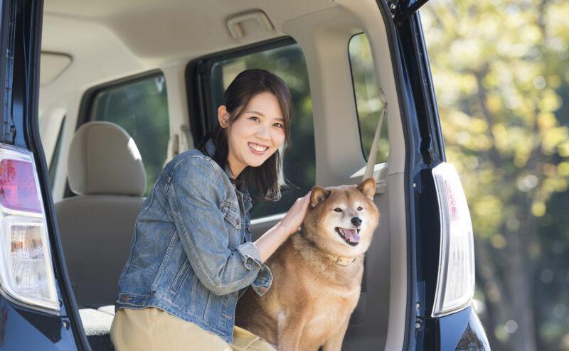愛犬を乗せた車の運転でやっていけないこととは?どのように乗せればいい?