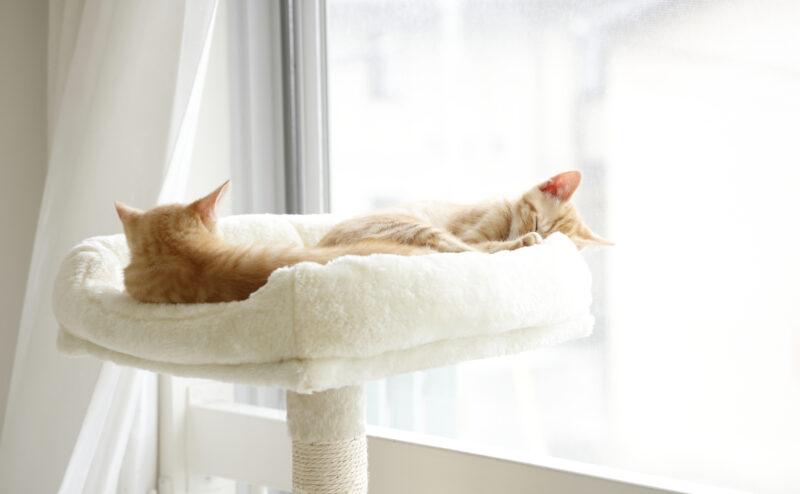 猫が快適に過ごせる室温や湿度は?調整方法をご紹介!