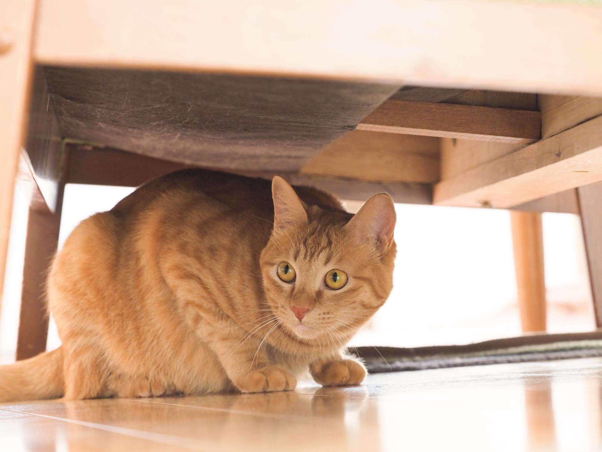 猫に嫌われてない?飼い主が知るべき猫が嫌がる行動とは?