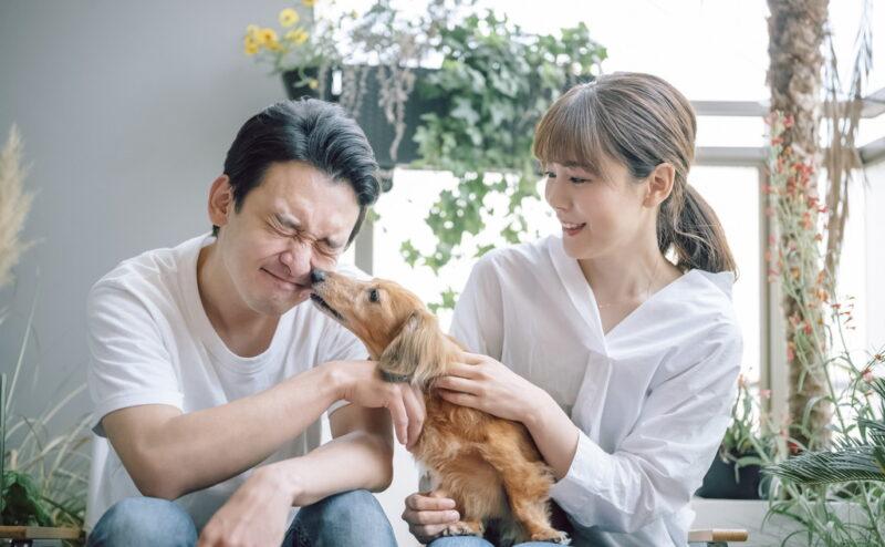 犬が飼い主の顔を舐める理由とは?