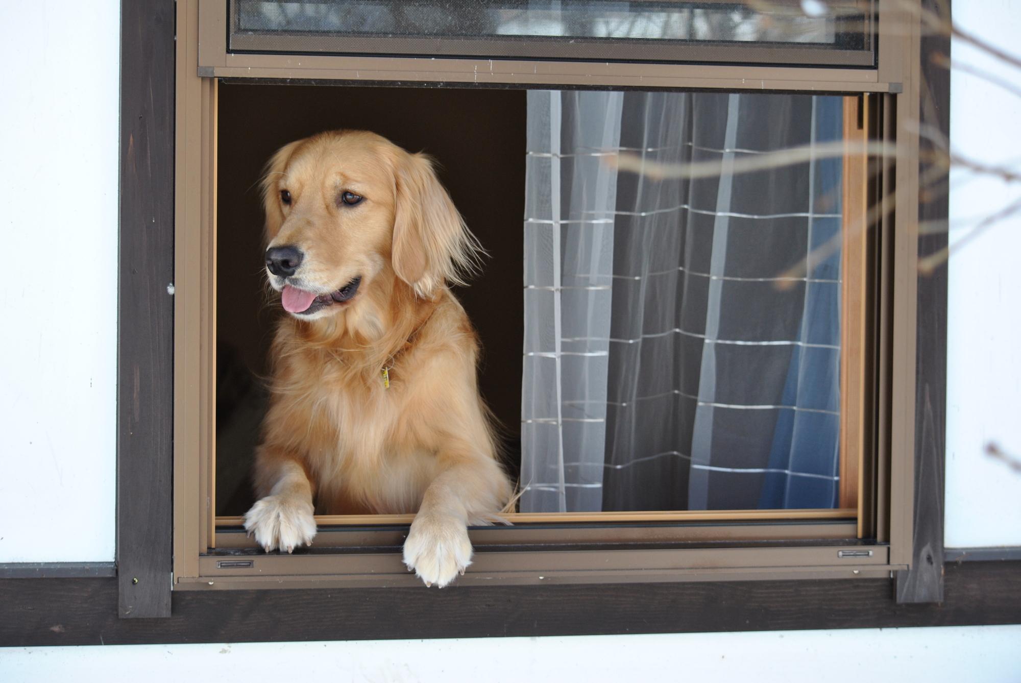 犬と泊まれる宿でのマナーについて~ペットとの宿泊ルール~