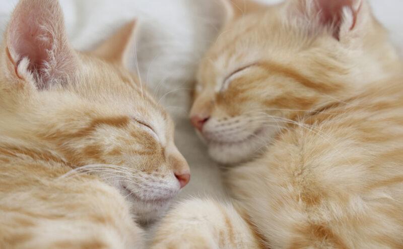 猫を留守番させるときの注意点と準備をご紹介!